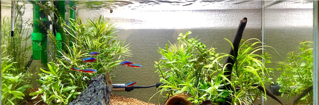 Co2 なし 水草 水草初心者です。CO2、肥料無しで、ライトのみで育つ水草はあります