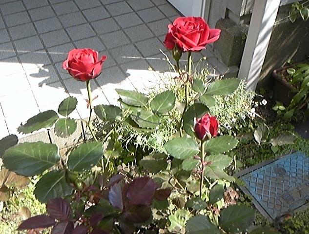 f:id:whitewitch:20120527143337j:image:w460