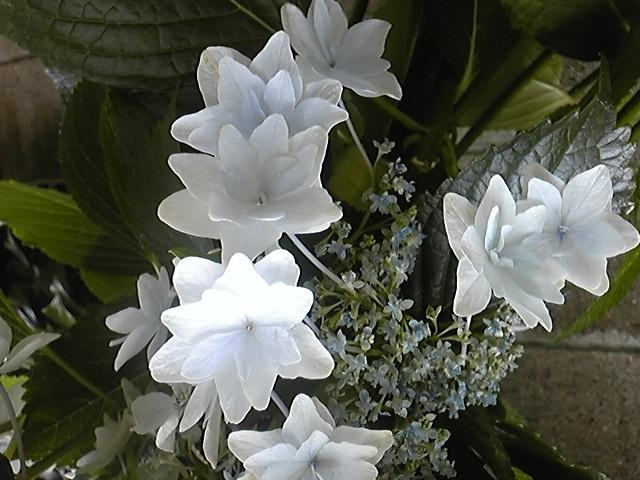 f:id:whitewitch:20120621111422j:image:w560