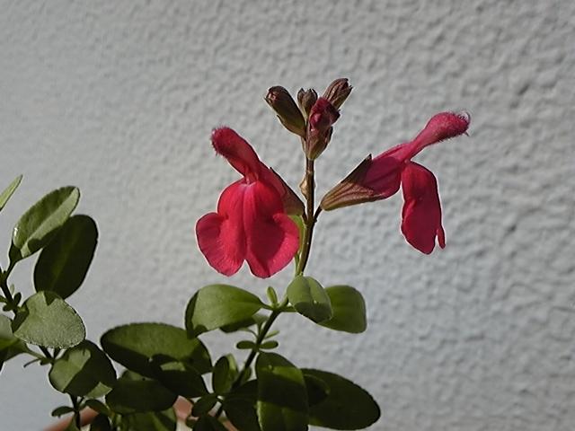 f:id:whitewitch:20121107111802j:image:w460