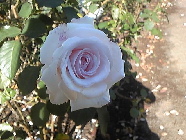 f:id:whitewitch:20151119115352j:image:w160