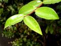 rain_leaves
