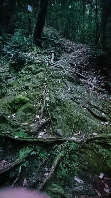 f:id:wide-tree:20180108102829j:image