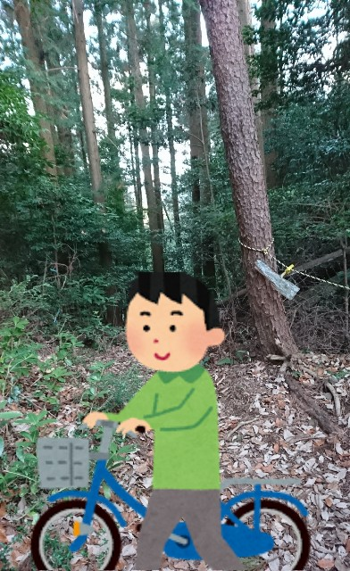 f:id:wide-tree:20180128215950j:image