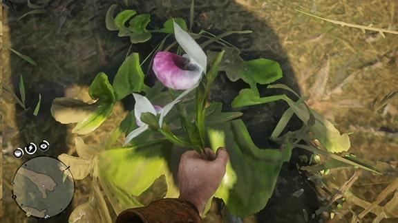レッドデッドリデンプション2の植物採取