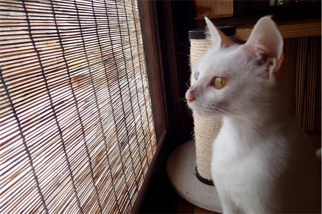 f:id:wild_cat:20160913143420j:image