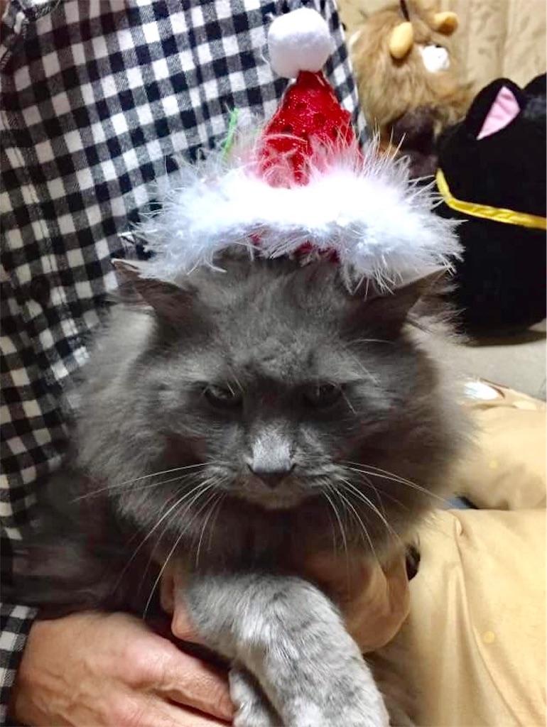 f:id:wild_cat:20161224070640j:image