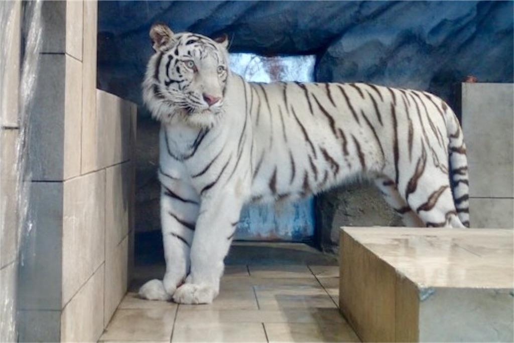 f:id:wild_cat:20170325125237j:image