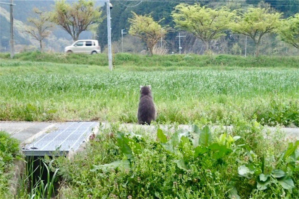 f:id:wild_cat:20170423160211j:image