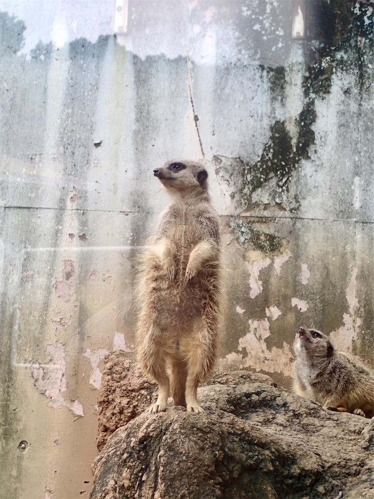 f:id:wild_cat:20190702134215j:image