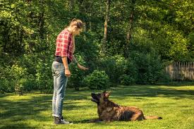 Benefits of Wireless Dog Fences - Dog Training Point
