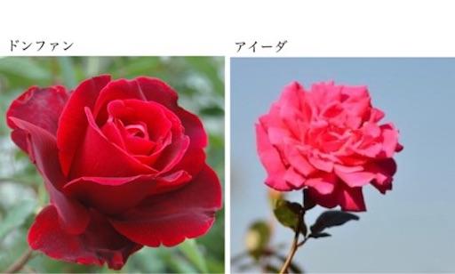 f:id:wind-waltz912:20200423125047j:image