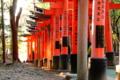 京都新聞写真コンテスト 木漏れ日差し込む稲荷山