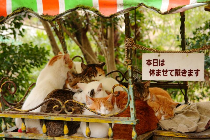 京都新聞写真コンテスト 看板ネコもおやすみだニャ~