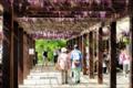 京都新聞写真コンテスト どこまでもついて行きますよ、お父さん