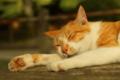 京都新聞写真コンテスト 猫だってあつーい!!