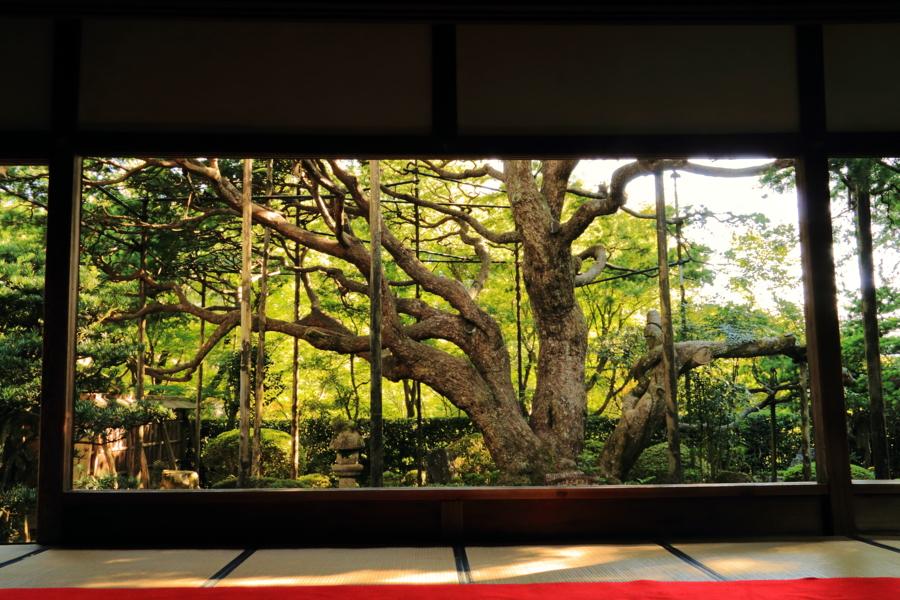 京都新聞写真コンテスト 実物大の美術館