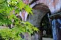 京都新聞写真コンテスト 待ち遠しい紅葉
