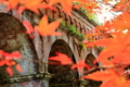 京都新聞写真コンテスト 溢れるモミジから