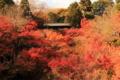 京都新聞写真コンテスト 紅葉林