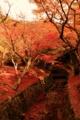 京都新聞写真コンテスト レッドカーペット