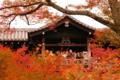 京都新聞写真コンテスト 魅了される人々