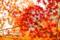 京都新聞写真コンテスト 燃える葉