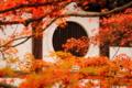 京都新聞写真コンテスト 和風建築と紅葉