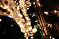 京都新聞写真コンテスト 点光源が生み出す芸術