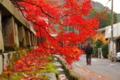 京都新聞写真コンテスト まだまだいけまっせー!