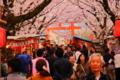 京都新聞写真コンテスト 桜満開、人満員