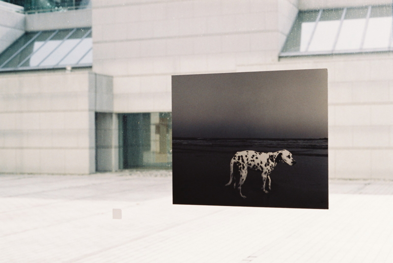 浮いた犬 (東京現代美術館) Minolta SR-1 SUPERIA X-TRA 400