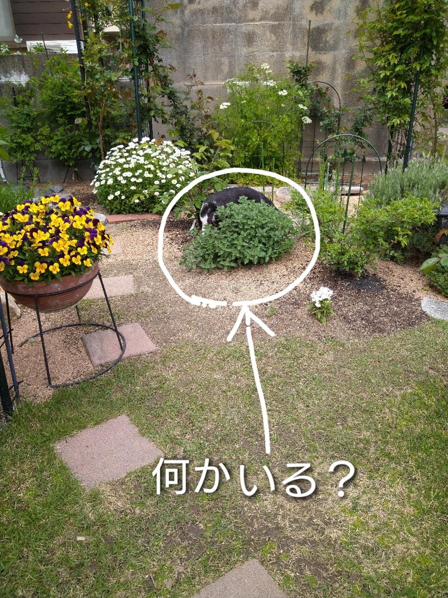 f:id:windkaoru:20210401162048j:plain