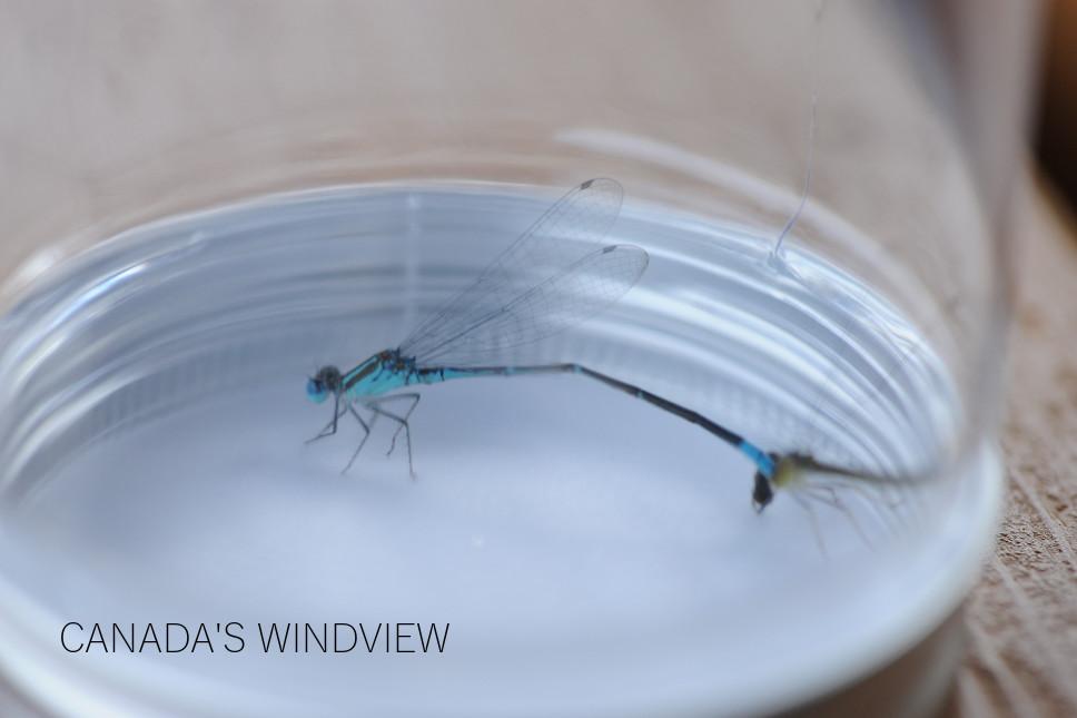 f:id:windview_canada:20190907222030j:plain