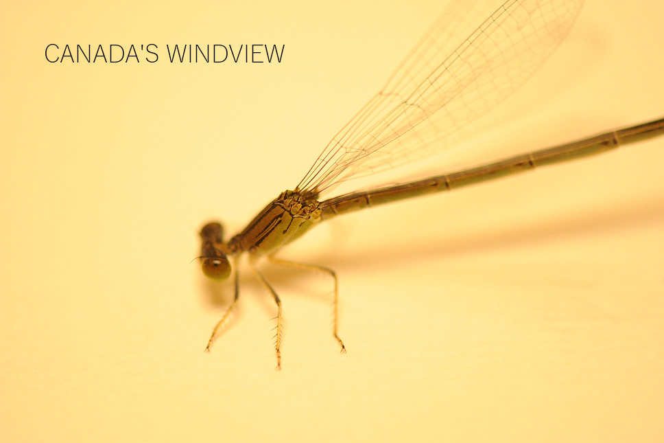 f:id:windview_canada:20190907222252j:plain