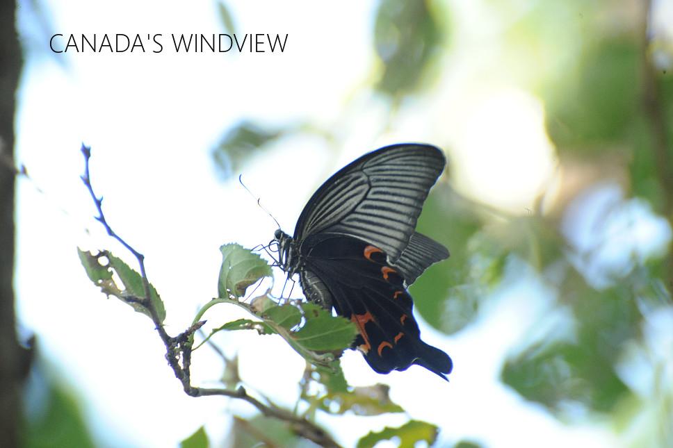 f:id:windview_canada:20190910232101j:plain