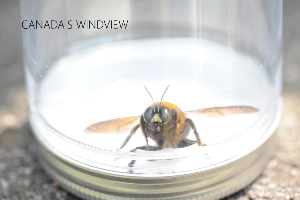 f:id:windview_canada:20200426222530j:plain
