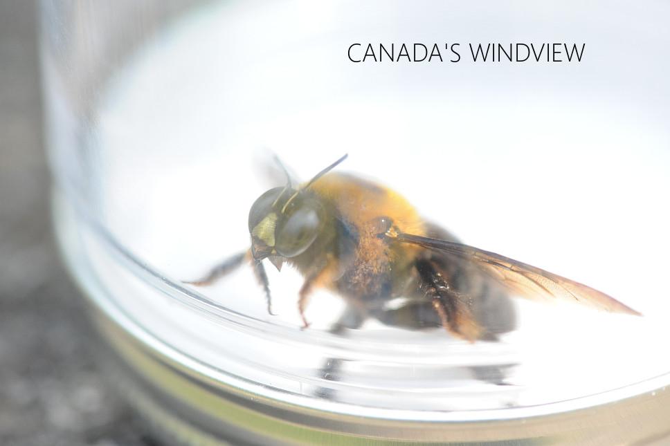 f:id:windview_canada:20200426222643j:plain