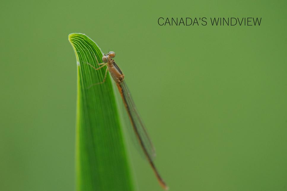 f:id:windview_canada:20200506171734j:plain