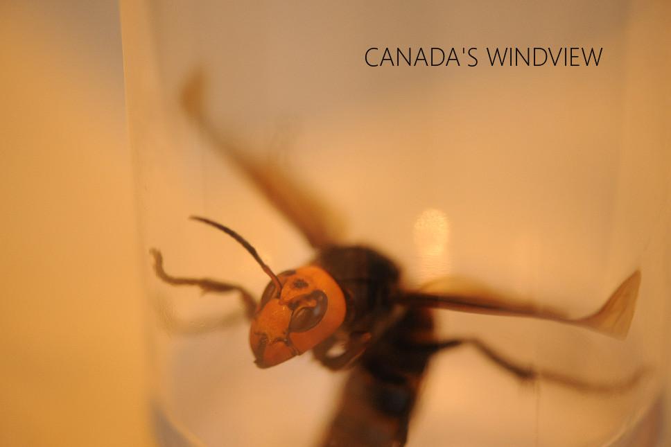 f:id:windview_canada:20200519194542j:plain