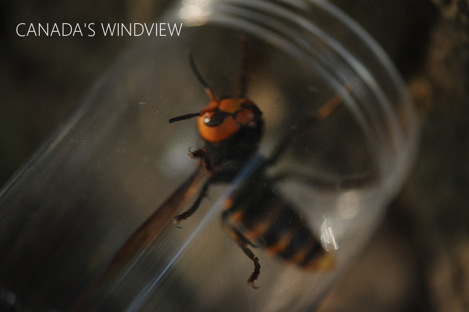 f:id:windview_canada:20200620221334j:plain