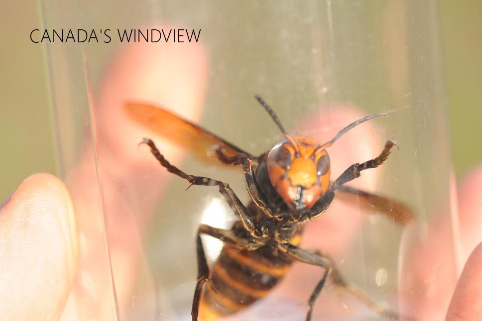 f:id:windview_canada:20200620221734j:plain