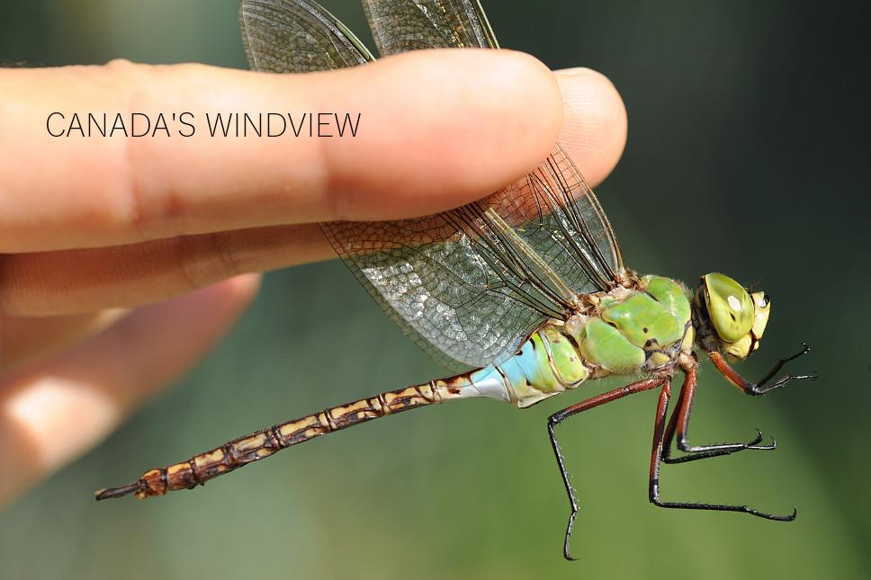 f:id:windview_canada:20201015002119j:plain