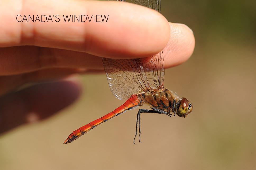 f:id:windview_canada:20201107235516j:plain