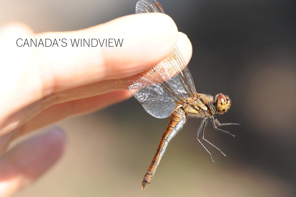 f:id:windview_canada:20201107235641j:plain