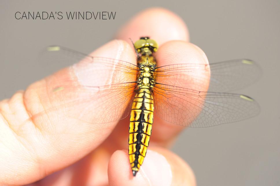 f:id:windview_canada:20210423221124j:plain