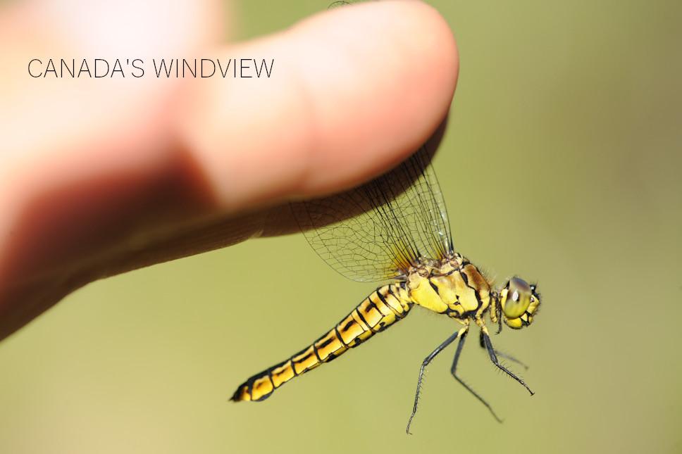 f:id:windview_canada:20210423221226j:plain
