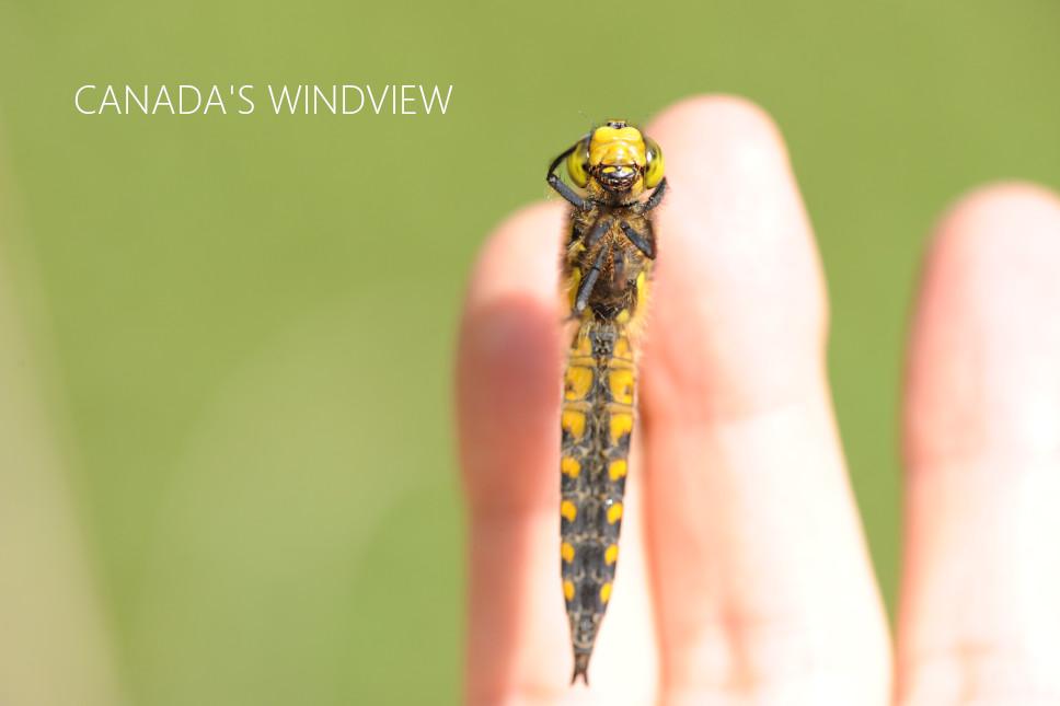 f:id:windview_canada:20210425200125j:plain