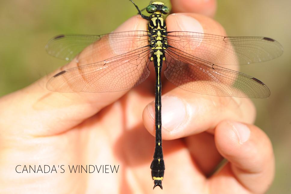 f:id:windview_canada:20210509230446j:plain