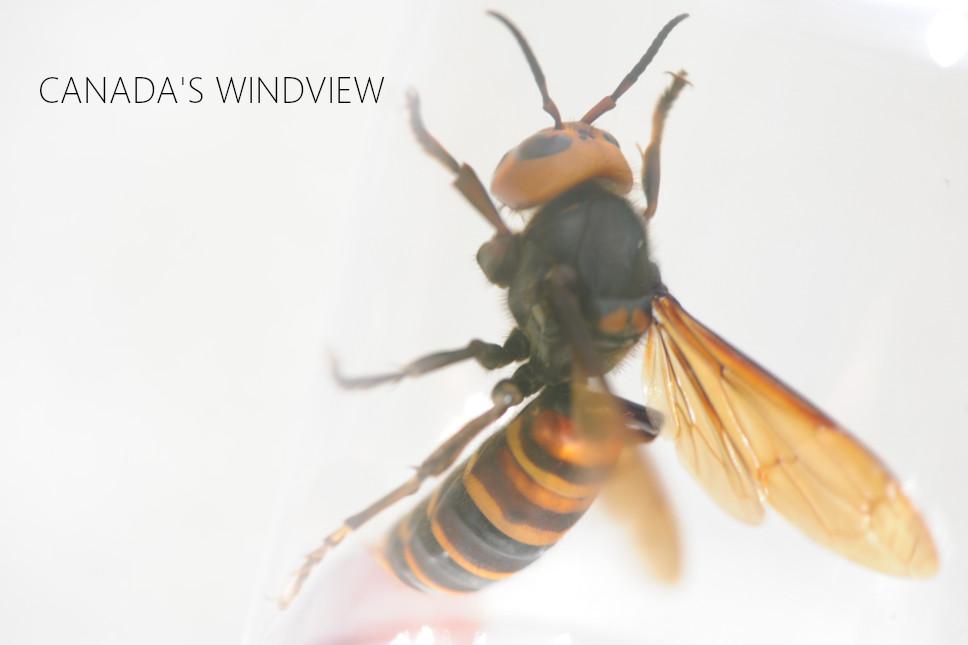 f:id:windview_canada:20210510222032j:plain